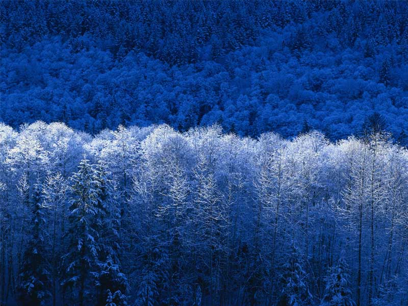 Winter Snow Scene in Blue and White